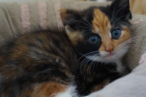 kittensballeen2