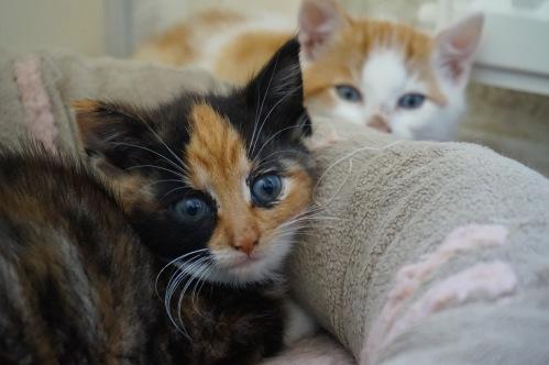kittenssamen