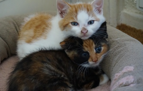 kittenssamen3