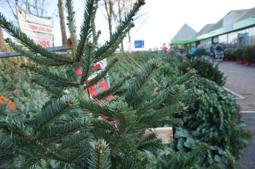 kersthuiskamerboom