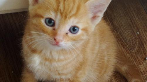 kittens5